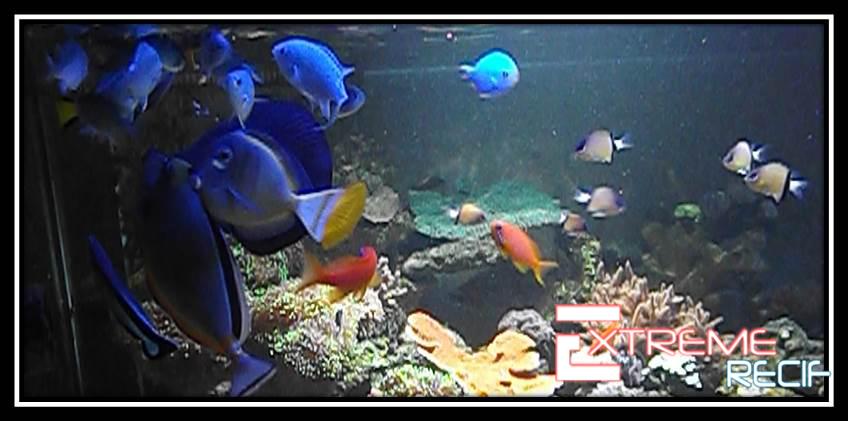 Poissons d'aquarium d'eau de mer à l'animalerie Extrême recif à Roche-lez-beaupré