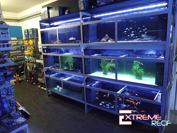 Aquarium eau douce besançon